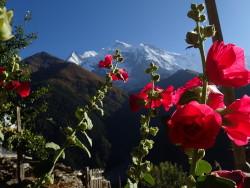 Vue sur les sommets des Annapurnas