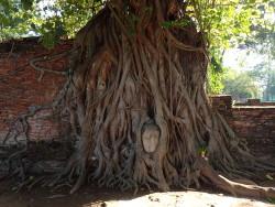 Les temples d'Ayutthaya