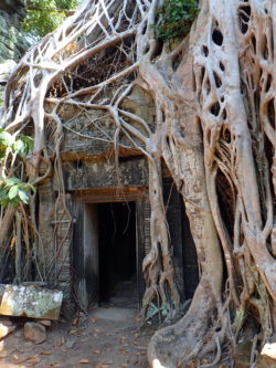 Temple Ta Prohm (Tomb Raider)