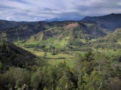 La vallée de Cocora depuis Salento